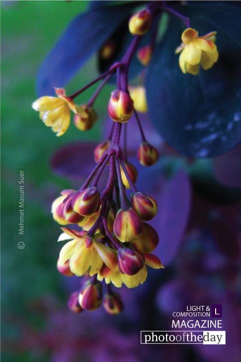 Purple and Yellow, by Mehmet Masum
