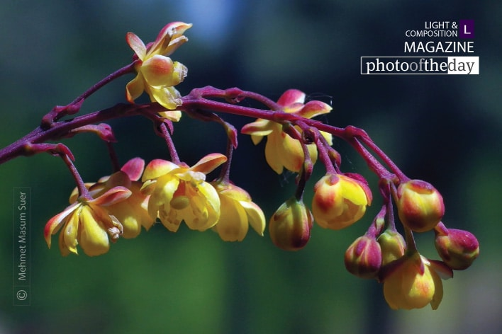 Leaning Flowers, by Mehmet Masum