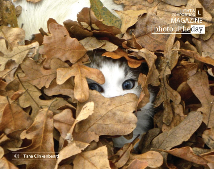 Peek-a-who? by Tisha Clinkenbeard
