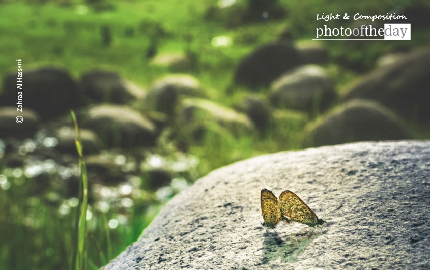 Butterfly Smile, by Zahraa Al Hassani