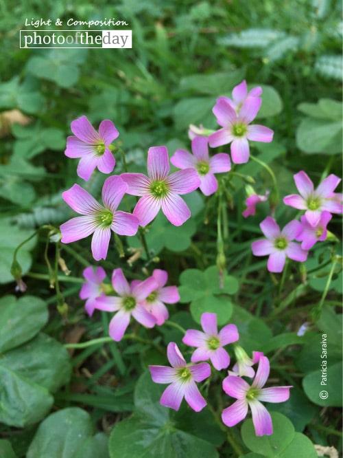 Flores in My Garden, by Patricia Saraiva