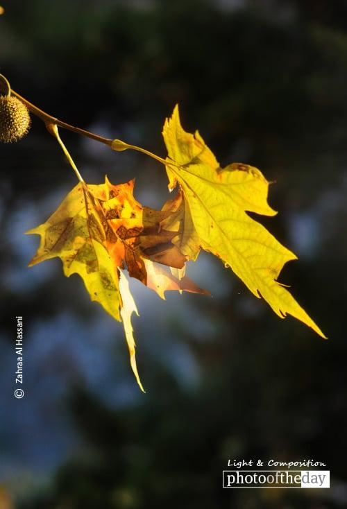 Fall in Love, by Zahraa Al Hassani