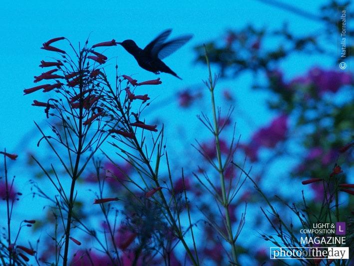 Fly Away Home, by Natalia Torrealba