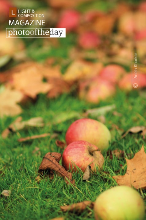 Apples in Autumn, by Anish Kharkar