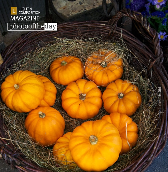 I Love Autumn, by Michaela Sibi