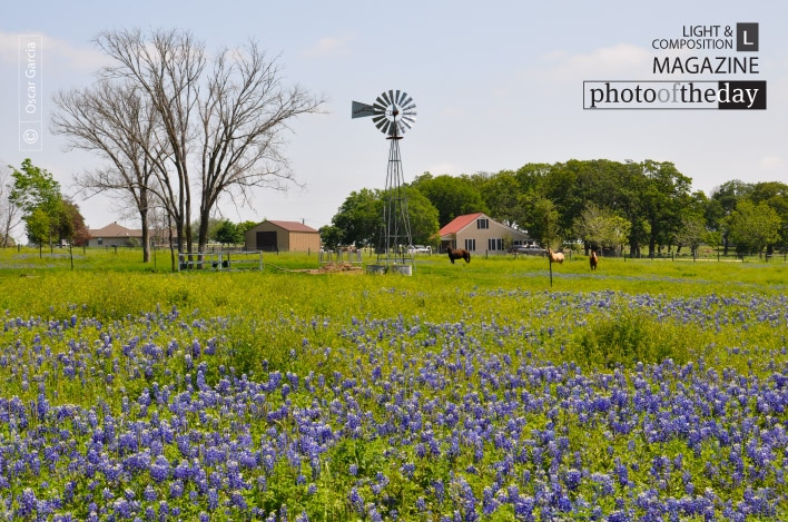 Mill, Horse and Bluebonnet, by Oscar Garcia