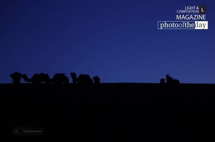 Saharan Silhouette, by Nilla Palmer
