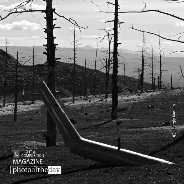 Geometry of Dead Forest, by Sergiy Kadulin