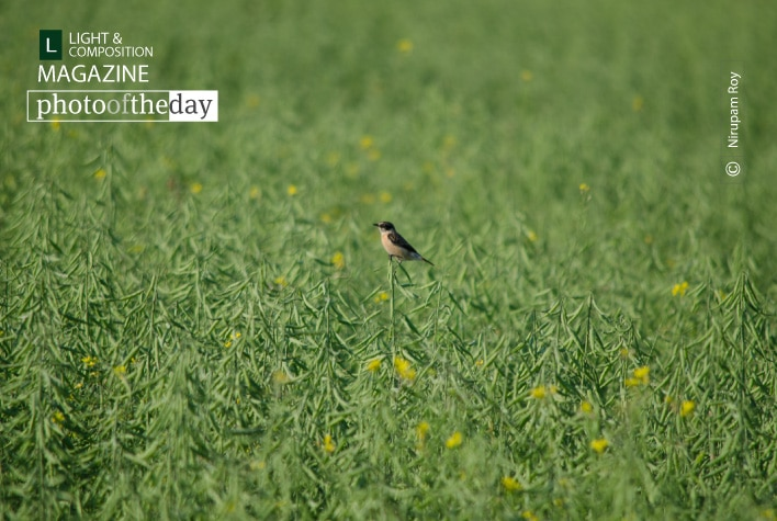 Alone, by Nirupam Roy