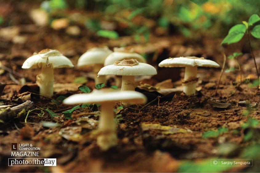 Nature Naturally, by Sanjoy Sengupta