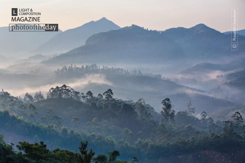 Misty Morning at Munnar, by Prasanth Chandran