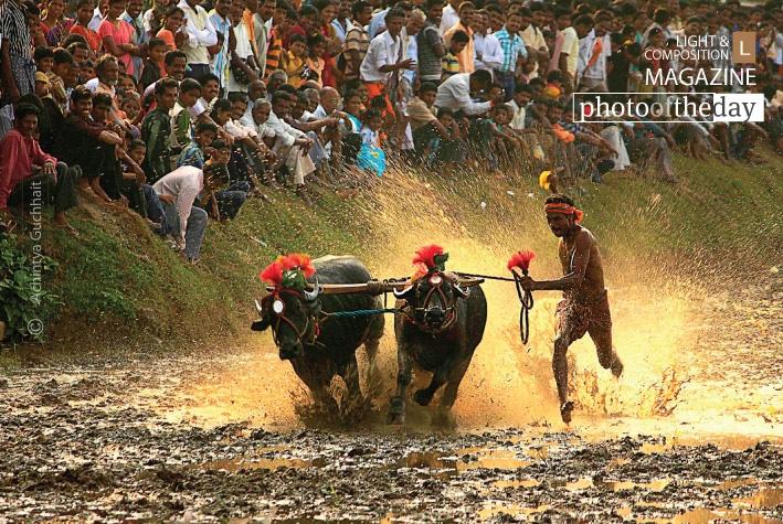 Kambala, a Village Sports, by Achintya