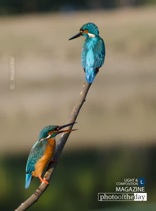 Fishing in Pair, by Nirupam Roy