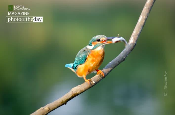 Priceless Catch, by Nirupam Roy