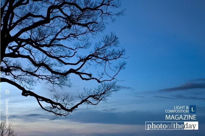 Tree Branches from Amedikallu, by Sandeep Chandra
