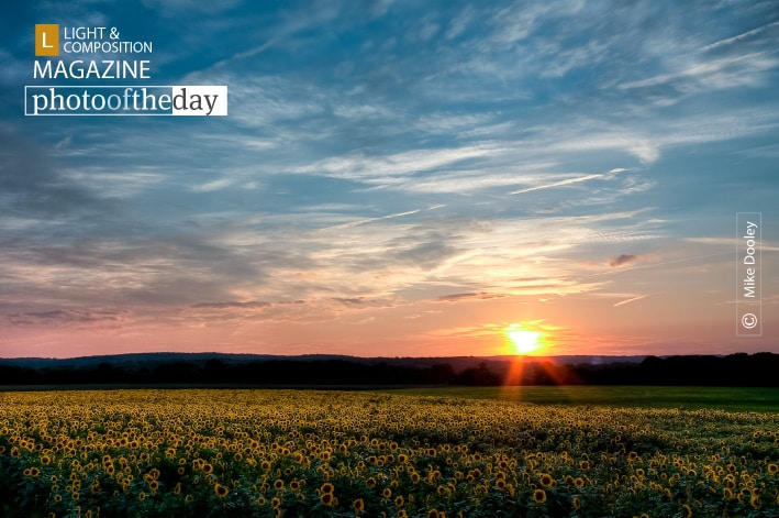 Sunflower Sunset, by Mike Dooley