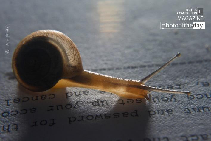 The Slow Reader, by Anish Kharkar