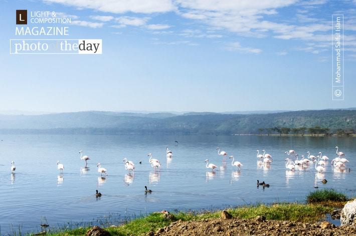 Lake Nakuru, by Mohammad Saiful Islam