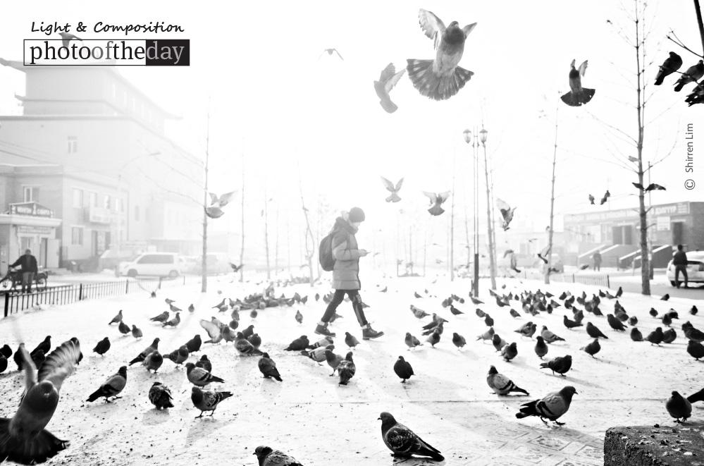 Cold, by Shirren Lim