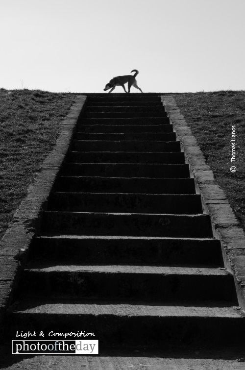 Dog on Top of Stairs, by Thomas Lianos