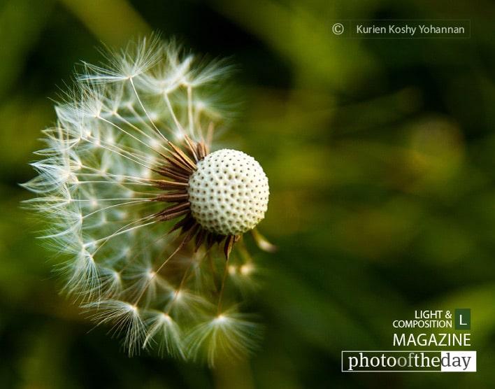 Dispersion, by Kurien Koshy Yohannan