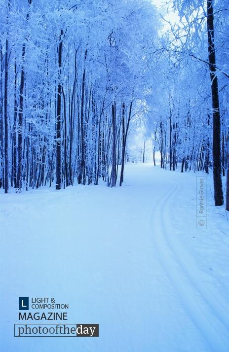 Ski Trail, by Ronnie Glover