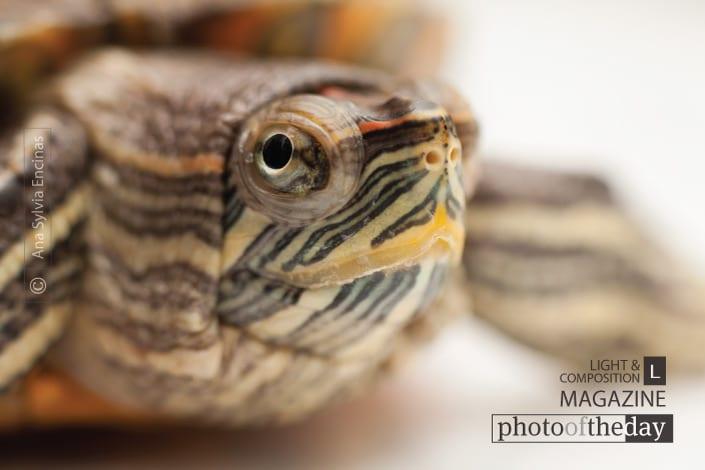 Tiny Water Turtle, by Ana Sylvia Encinas