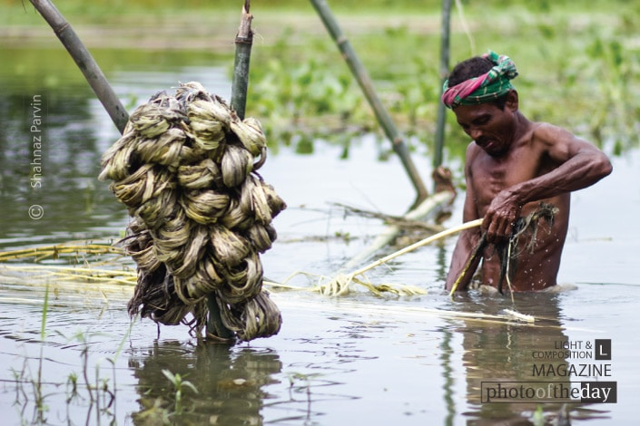 The Craftsman of Jute, by Shahnaz Parvin