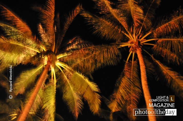 Palms at Night, by Ryszard Wierzbicki