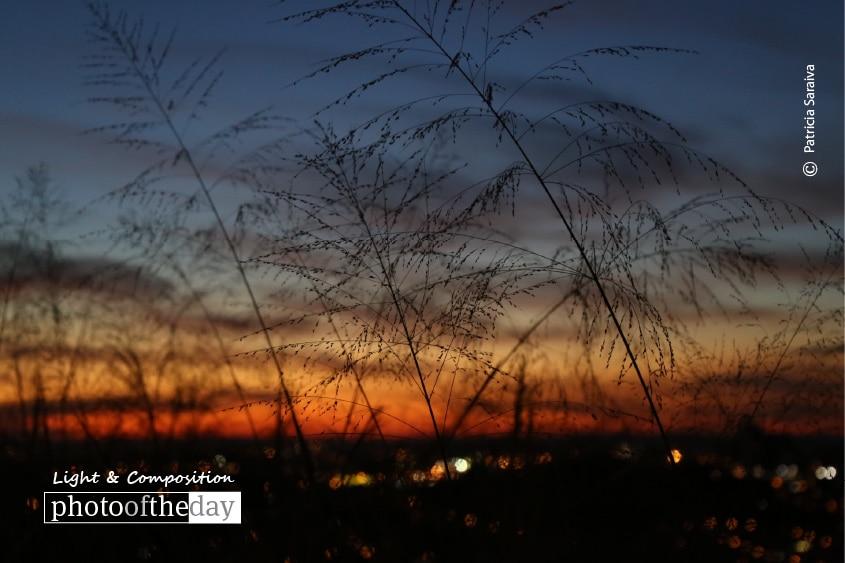 Charming Sunset, by Patricia Saraiva