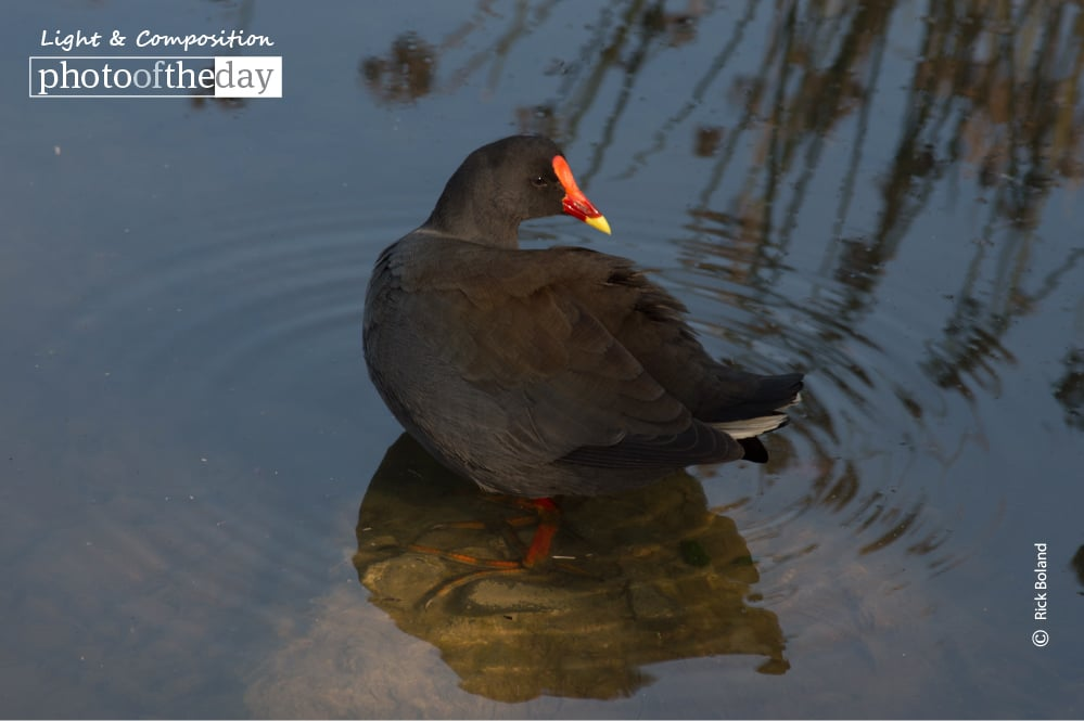 Bird Bath, by Rick Boland