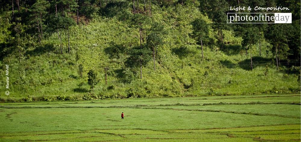 Fields of Green, by Masrur Ashraf