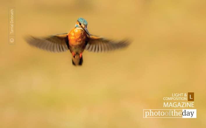 King's Flight, by Tamal Debnath