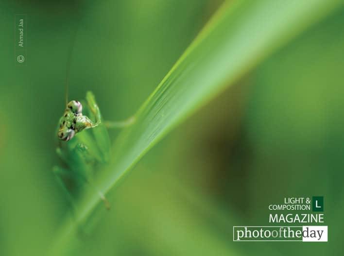 Mantis Eye, by Ahmad Jaa