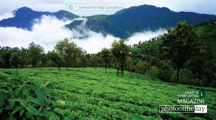 The Unforgettable Beauty of Nilgiri, by Subhashish Nag Choudhury