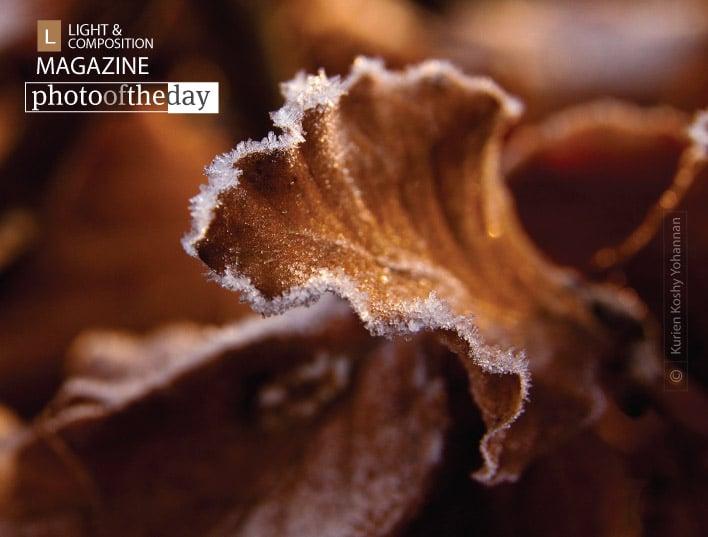 Frost, by Kurien Koshy Yohannan