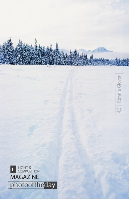 Across the Winter Landscape