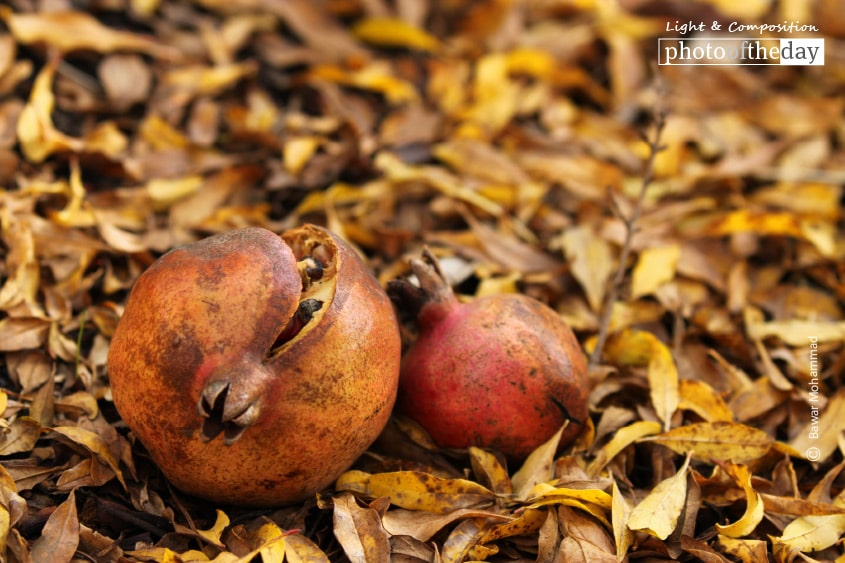 The Fruit of Love, by Bawar Mohammad