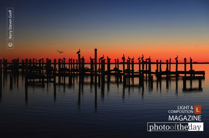 Pelican Rest, by Barry Steven Greff