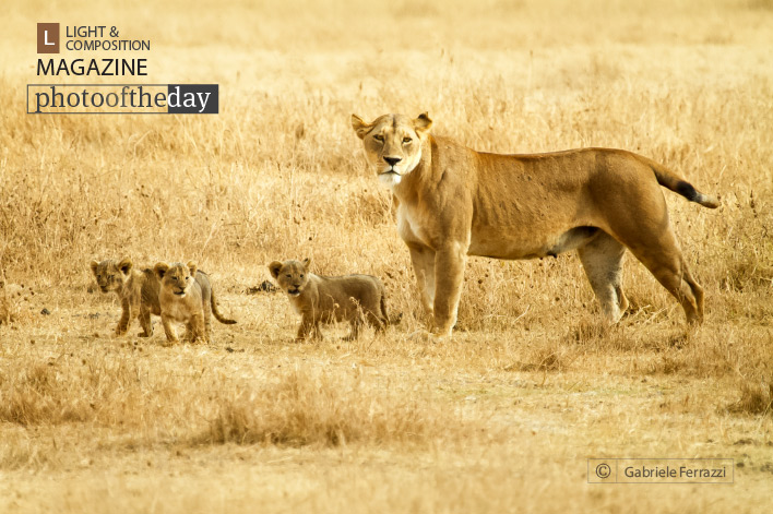 Lioness and Cubs, by Gabriele Ferrazzi