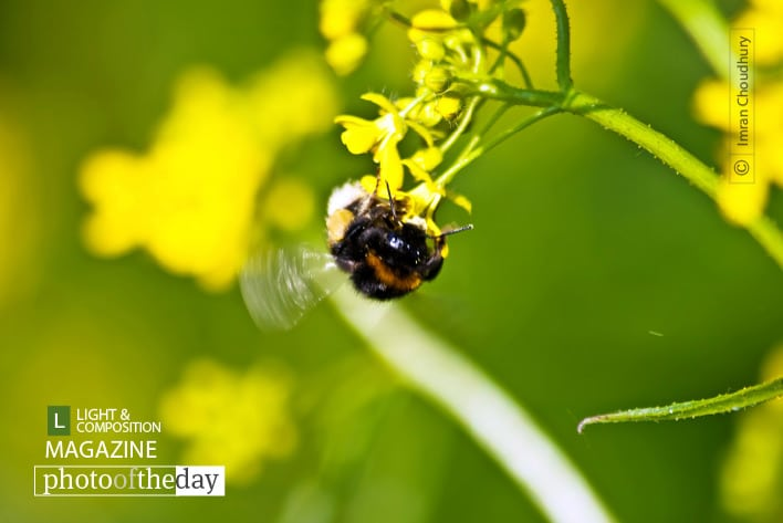 Busy Bee, by Imran Choudhury
