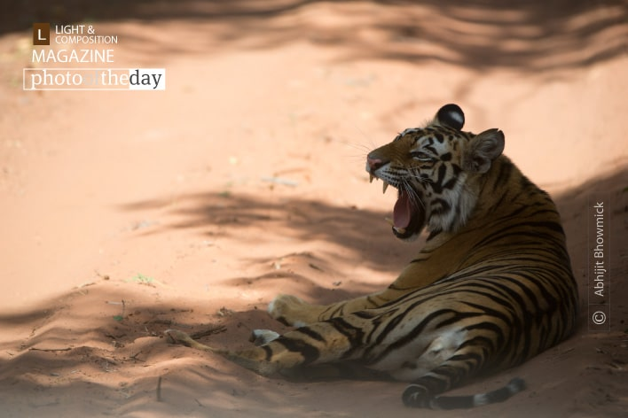 The Royals of Bandhavgarh, by Abhijit Bhowmick