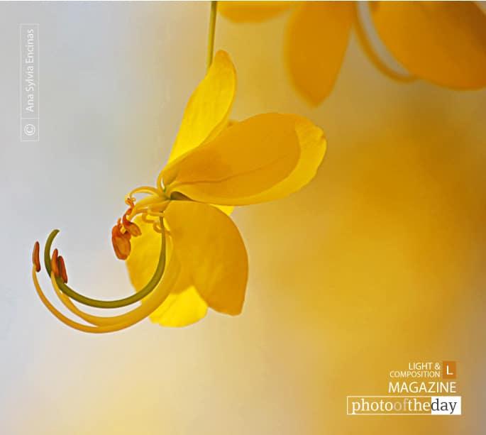 Golden Rain, by Ana Sylvia Encinas