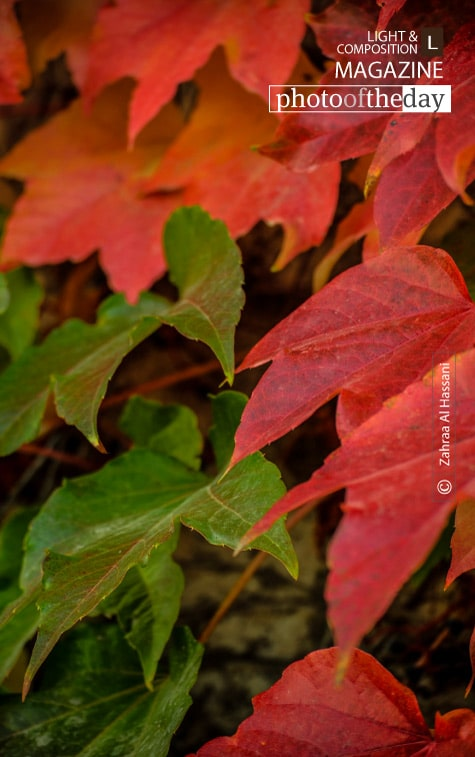 When the Leaves Start to Fall, by Zahraa Al Hassani