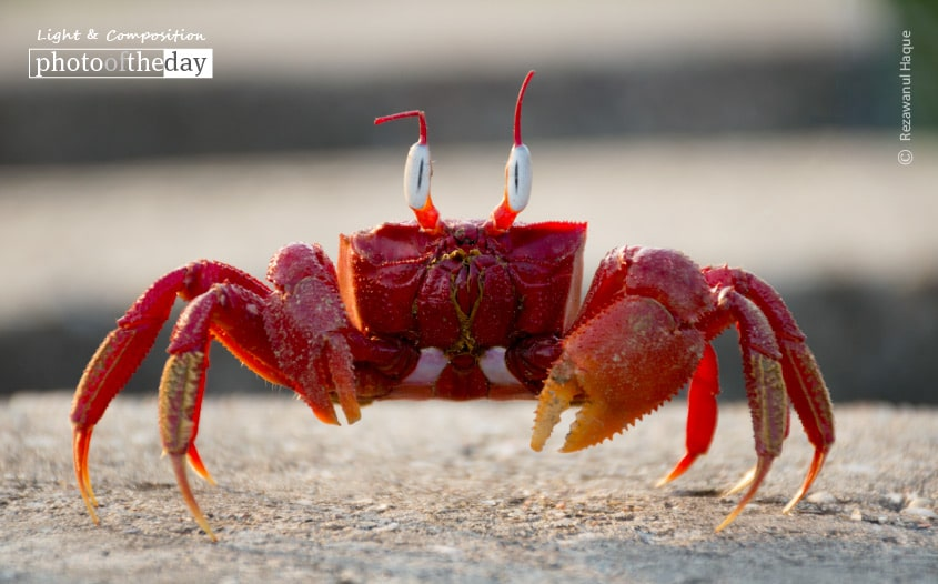 The Crab That Played with the Sea, by Rezawanul Haque