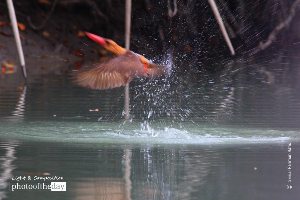 Bowing Winged Kingfisher, by Saniar Rahman Rahul