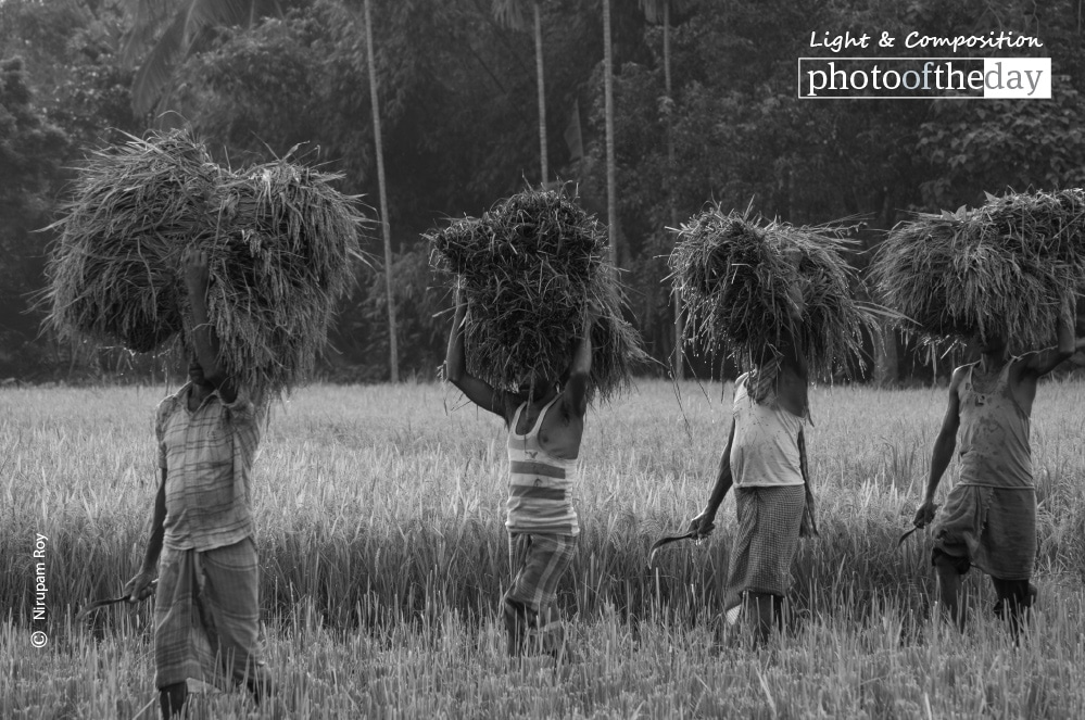 Time to Harvest, by Nirupam Roy