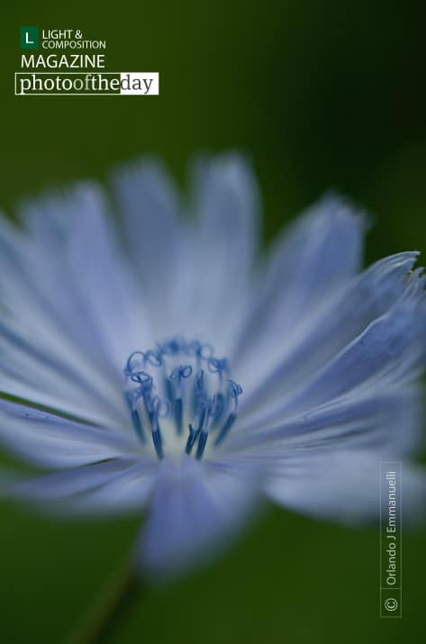 Blue Flower, by Orlando J Emmanuelli