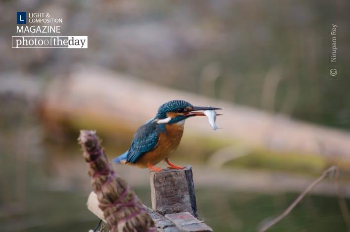 Just Catch, by Nirupam Roy