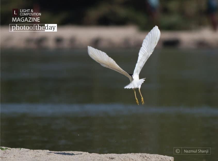 Take Off, by Nazmul Shanji